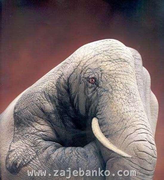 Optička iluzija slona - vješto oslikana ljudska šaka