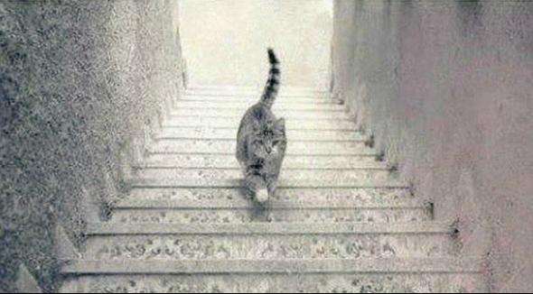 Zagonetna mačka - penje li se ili silazi niz stepenice