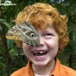 Savršeno tempirane slike - leptirovo oko