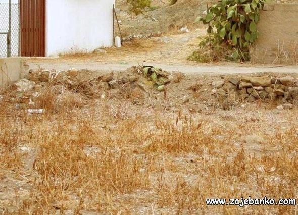 Skrivena mala mačka - optička iluzija stapanja s okolinom