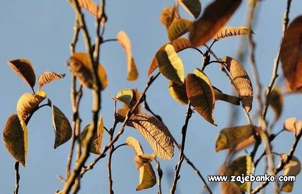 Skrivena ptica - perceptivna varka - stapanje s okolišem