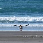 Optička iluzija - krilati pas na plaži