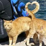 Mačji repovi u obliku srca - puka slučajnost