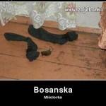 Bosanci - najbolji vicevi