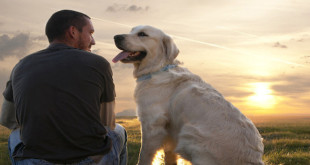 Mudre izreke o psima