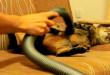 Mačka i usisavač - smiješni kućni ljubimci