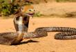 Mačka i zmija - smiješni video klip