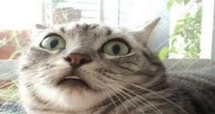 Mačka koja govori - smiješni video klipovi