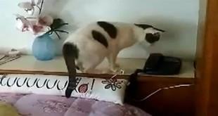 Mačka se javlja na telefon