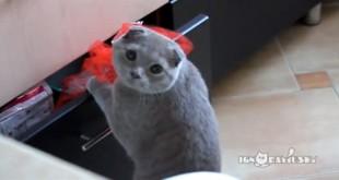 Mačka uhvaćena u krađi