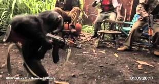 Majmun s puškom - smiješni video klipovi