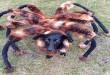 Napad divovskog pauka - video klip