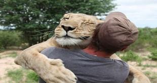 Prijatelj lavova video