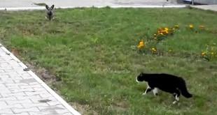 Psi koji se boje mačaka