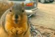 Brbljava vjeverica: slatke životinje pričaju