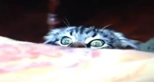 Smiješna reakcija mačke - video klip