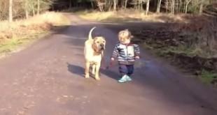 Mala djeca i psi - smiješni video