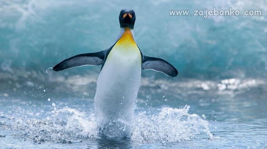 Netaknuta neukroćena priroda - svijet pingvina