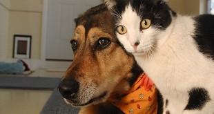 Prijateljstvo psa i mačke video