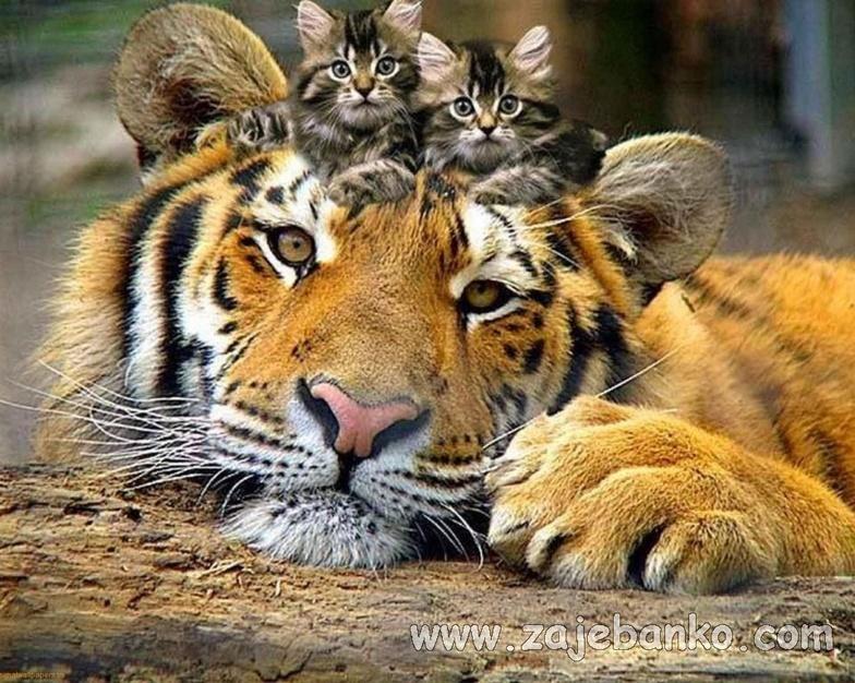 Slike preslatkih životinja