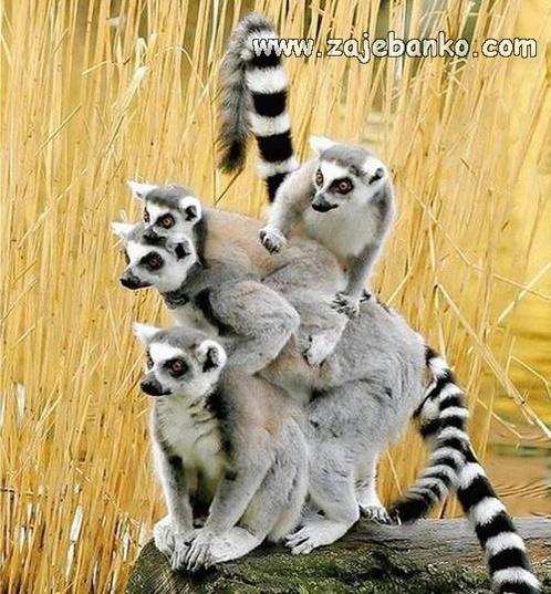 Slike simpatičnih i slatkih životinja