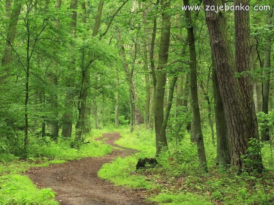 Prekrasne slike šuma