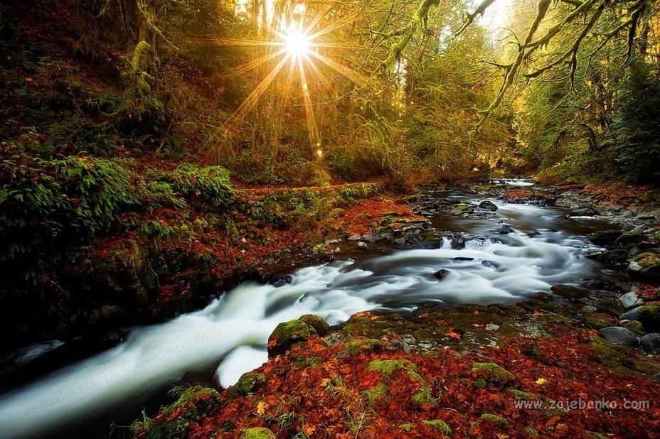 Šumski pejzaž