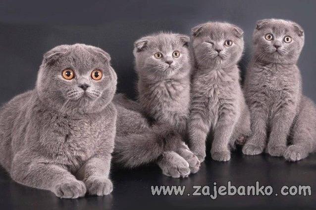 Slatke životinje: mačka i mačići