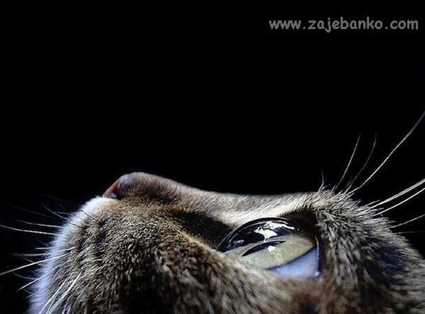 Životinje slike za desktop Životinje na