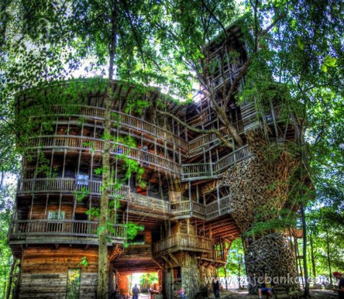 Kućica u krošnji drveta