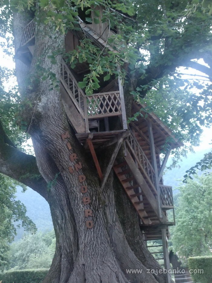 Najljepše kućice na drvetu širom svijeta