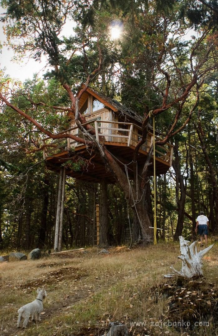 Unikatne kućice u krošnji stabala