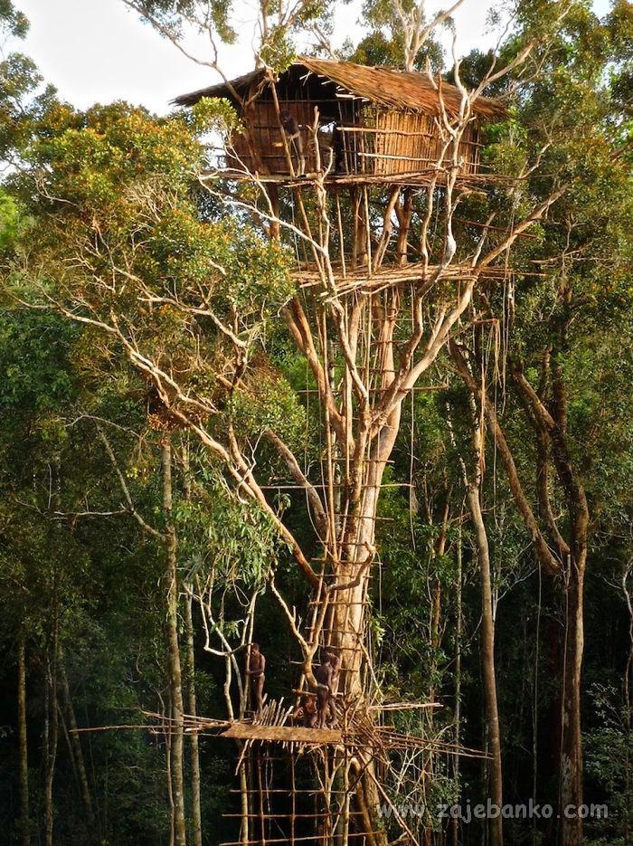 Prekrasne kućice u krošnji stabla