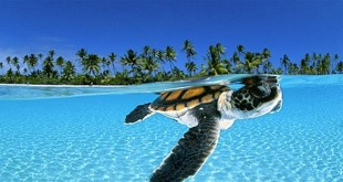 Svijet podmorja - morske životinje