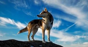 Prekrasna priroda - svijet životinja