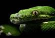 Najljepše slike zmija