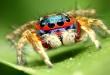 Prekrasni pauci