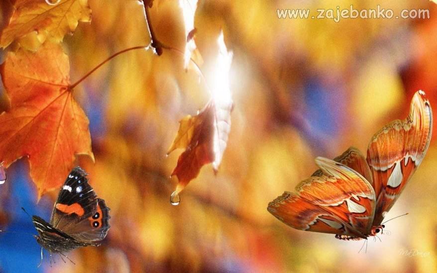 Čarolija i ljepota jeseni u slikama