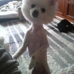 Pas iz frizerskog salona