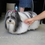 Moderne frizure za pse