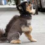 Kreativne pseće frizure i šišanja