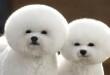 frizure za pse