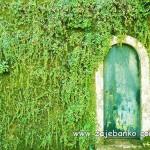 Fascinantna stara vrata