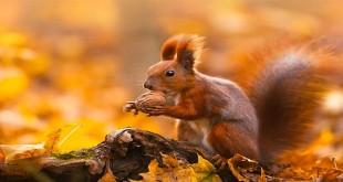 najljepše slike jeseni