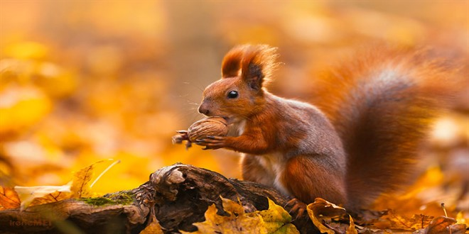 Najljepše Slike Jeseni čarolija Jeseni U Prirodi Zajebanko