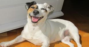 sretne nasmijane životinje