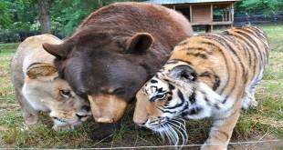 neobična životinjska prijateljstva