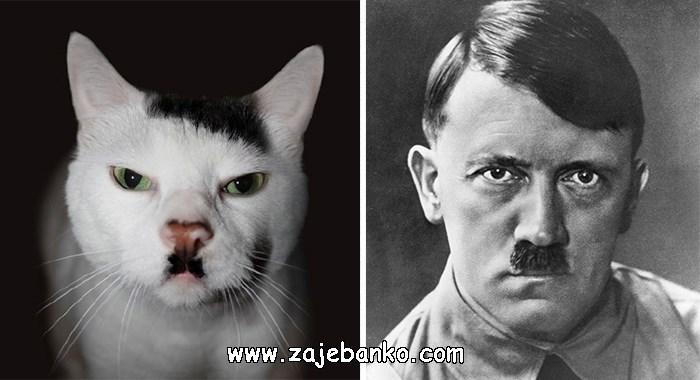 Mačka izgleda poput Adofla Hitlera