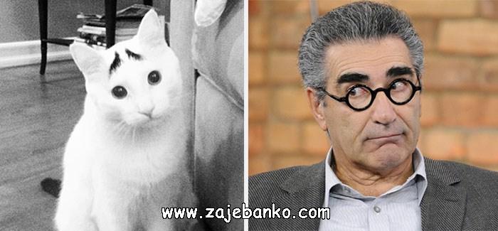 Mačka izgleda poput Eugena Levyja