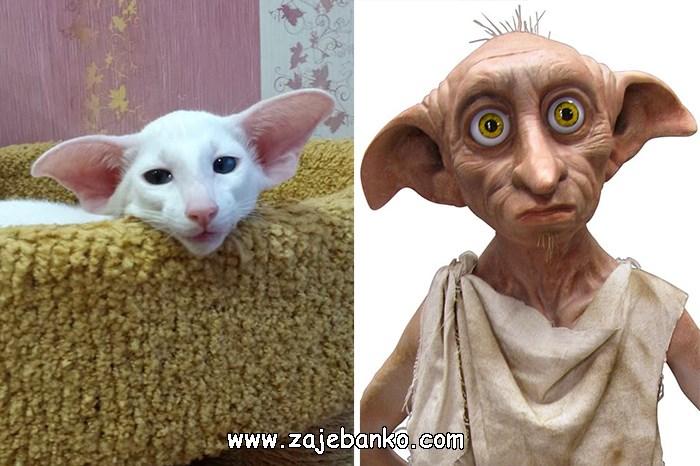 Mačka poput Dobbiea